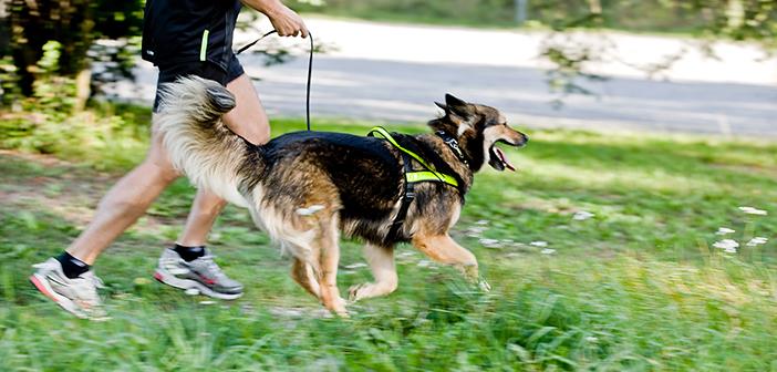 Hundlöpet - Sveriges hundvänligaste motionslopp!